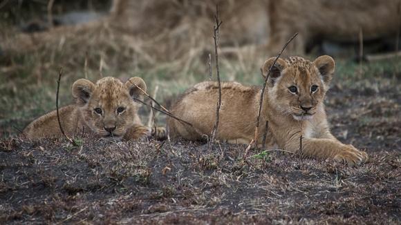 Northern Serengeti (Lamai), Tanzania