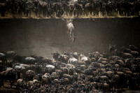 the Great Migration in Northern Serengeti (Lamai)